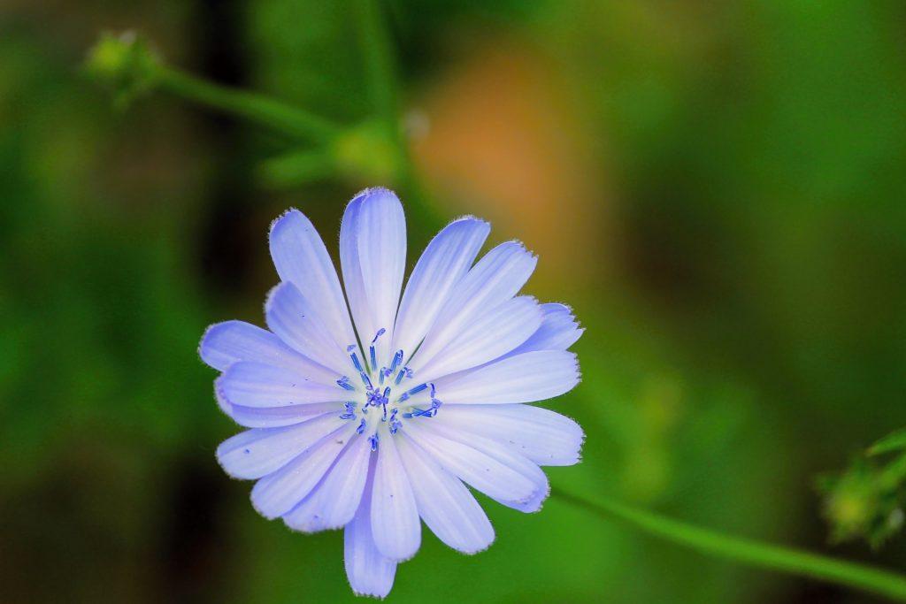Welke Bach Bloemen Remedies heb je nodig?
